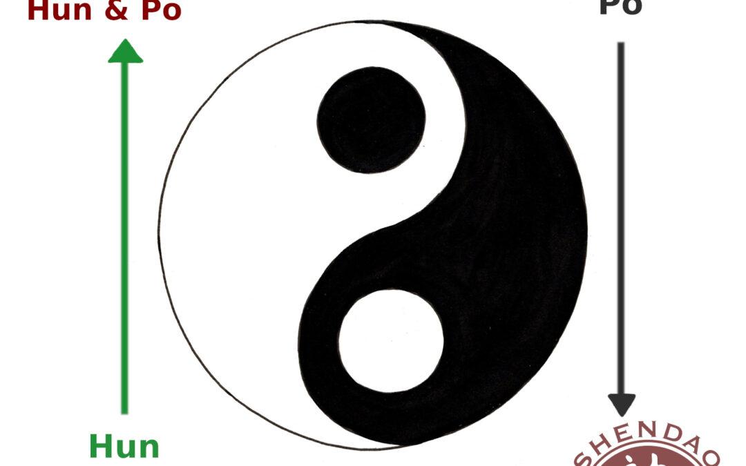 Zelluläres Gedächtnis – Hun & Po
